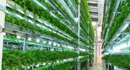 Could Vertical Farming Be The Answer To Hunger In Africa?