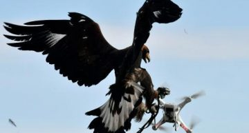 The French Military Is Training Eagles To Down Enemy Drones – AFP